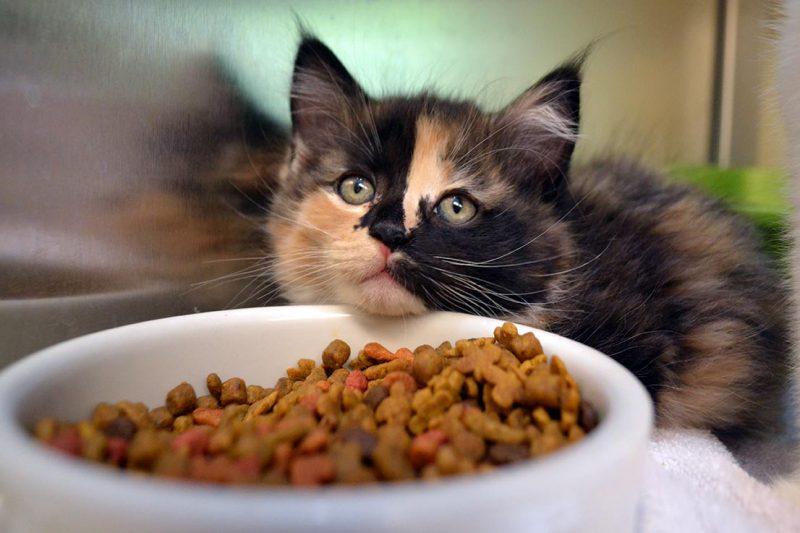 Kitten Wishlist