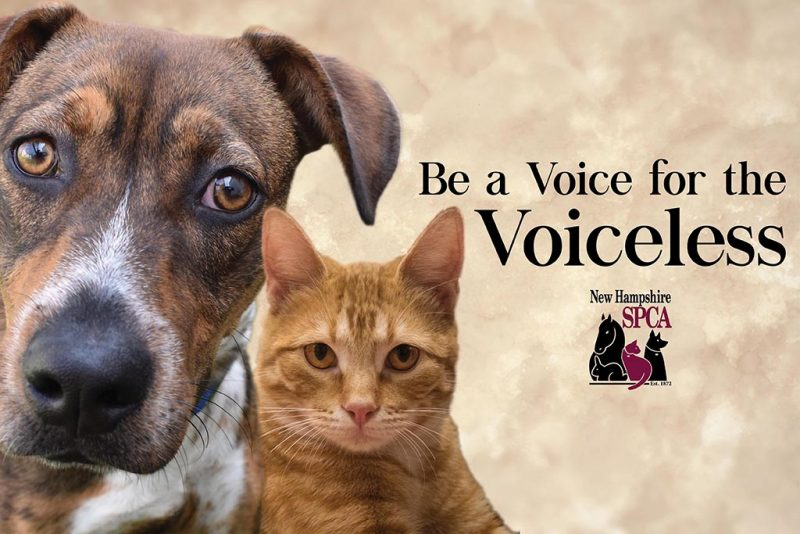 Update: 2019 Legislative Issues - NHSPCA