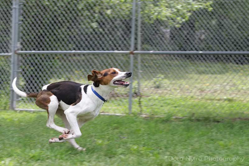 Dog sport classes
