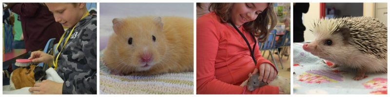 Humane Education Classroom Pets