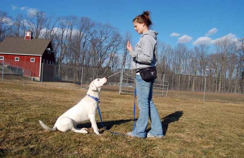 Dog Training Classes NHSPCA