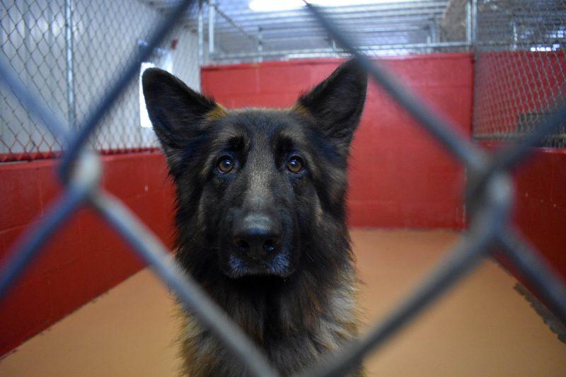Report Animal Cruelty | New Hampshire SPCA