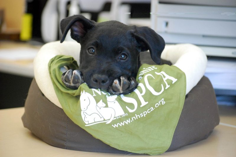 Dog Training Classes | New Hampshire SPCA