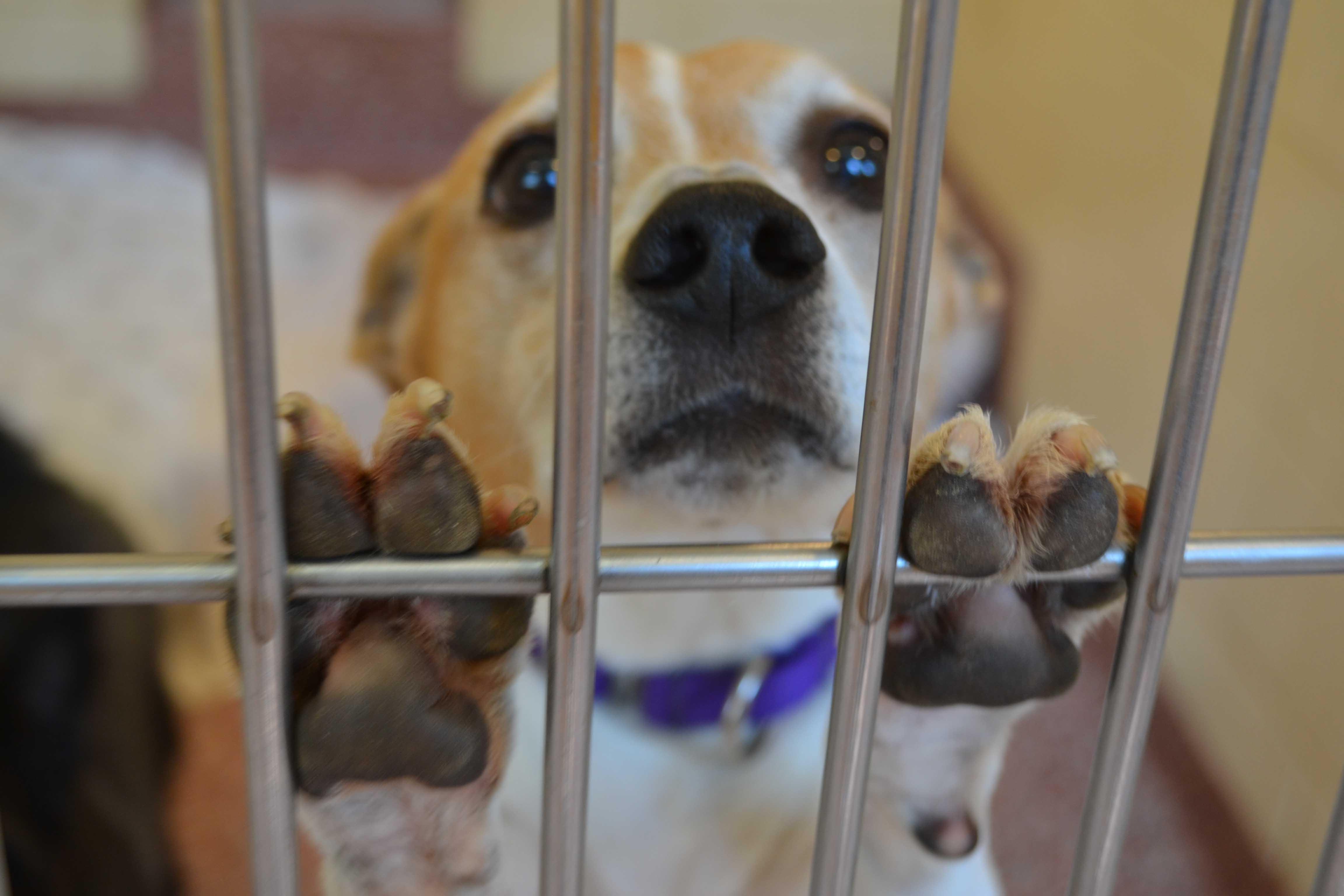 How To Help Stop Puppy Mills - NHSPCA