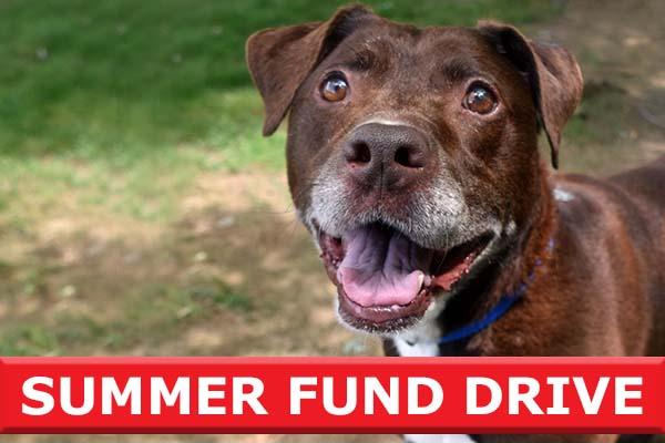 summer fund drive